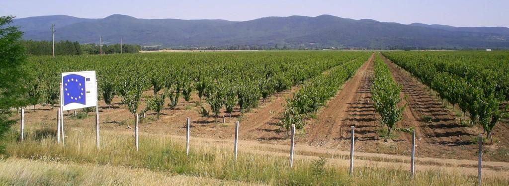 Diva Agro field